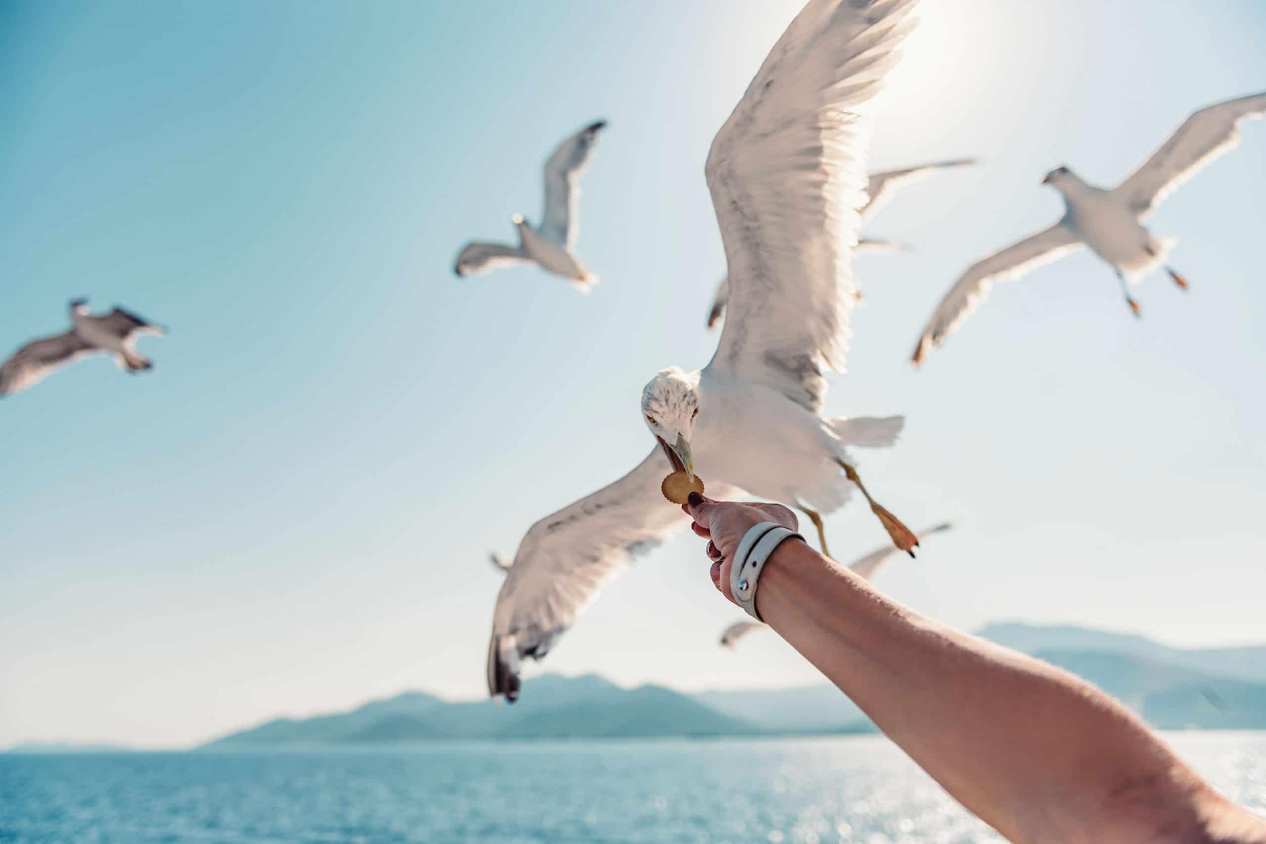 Lead Nurturing entlang der Customer Journey